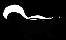 JINGOS Skunk Graphic